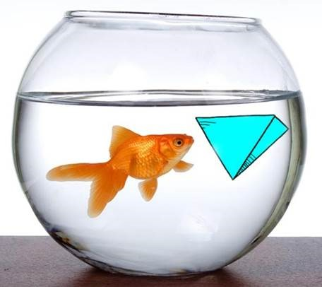 The Inverted pyramid and the fish